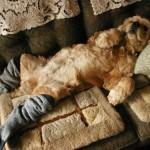 Os Melhores Hotéis para Deixar seus Cães e Gatos nas Férias