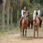 Cavalos em Big Valley hotel fazenda